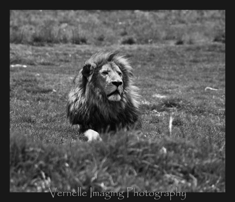rhino lion park00003