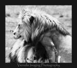 rhino lion park00004