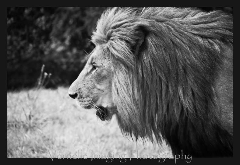 rhino lion park00019